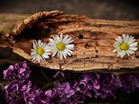 dekorace - Jarní dekorace