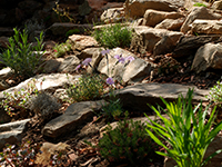 zahrada - Skalky